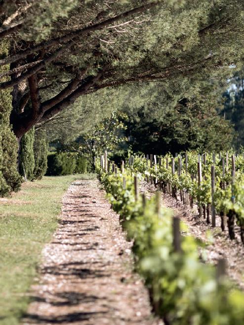 Flacons : Château Monbrison, terroir de Margaux