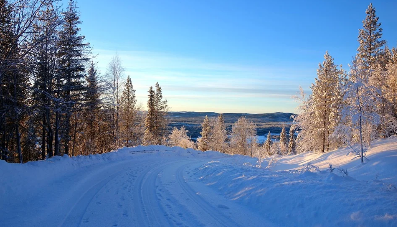 Laponie : Tétras au pays des neiges