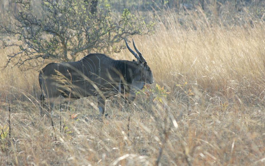 Cameroun, Bénin : deux pays de grande chasse