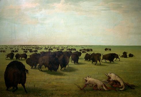 "George Catlin ""La chasse au bison"""