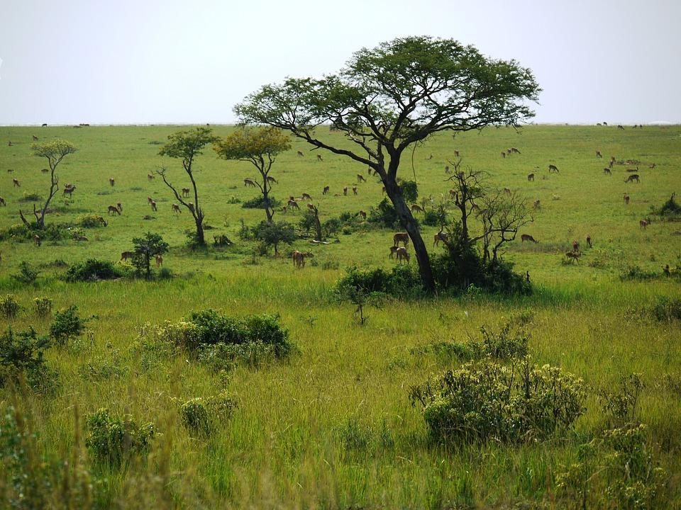 Les couleurs de l'Ouganda