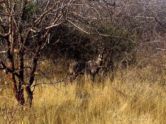 Tanzanie. Splendeurs masaïs, au royaume du petit koudou