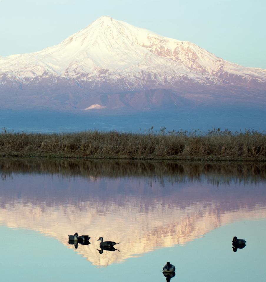Les canards du mont Ararat
