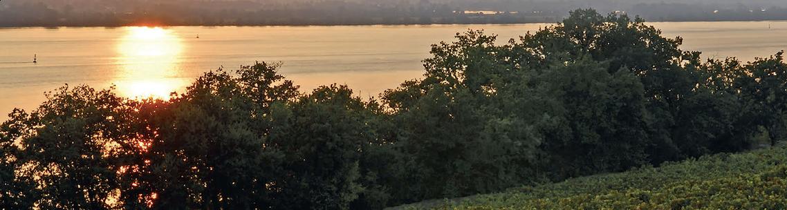 Côtes de Bourg : Le renouveau du Malbec